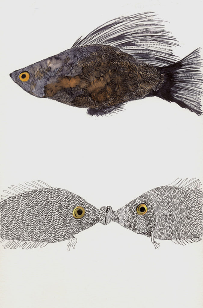 kissing-fish-for-site